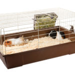 BUYER'S GUIDE AND REVIEW OF BEST GUINEA PIG CAGE!