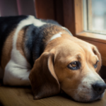 5 Reasons Why is Your Dog Losing Weight?