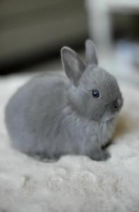 How long do rabbits live