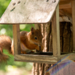 What to Feed Squirrels in Your Backyard to Make Them Go Nuts